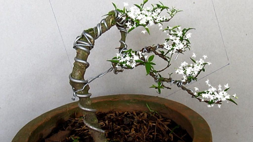 4 dáng cây cơ bản trong nghệ thuật cây cảnh - Sổ tay nông nghiệp