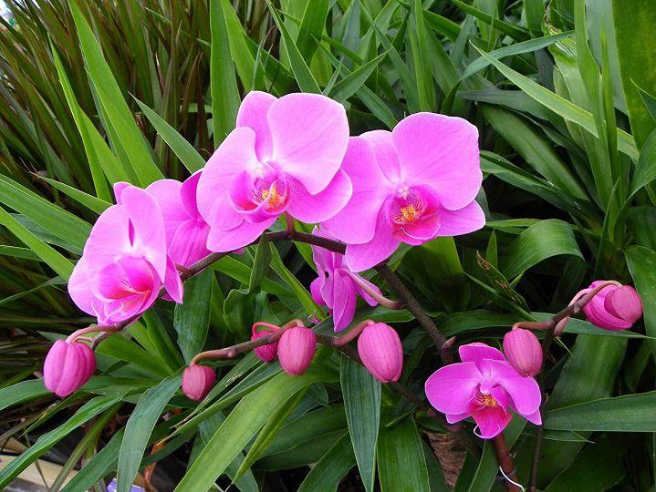 cach kich thich cay ra hoa tang nhiet do phan bon kich thich ra hoa… - Cách kích thích cây ra hoa: tăng nhiệt độ, phân bón kích thích ra hoa,…
