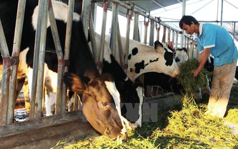 Giá bò giống và bò thịt hiện nay. Các trang trại bán bò giống trên cả nước
