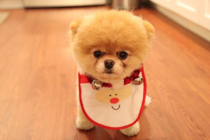 Giống chó đáng yêu nhất thế giới. Giá các giống chó dễ thương nhất