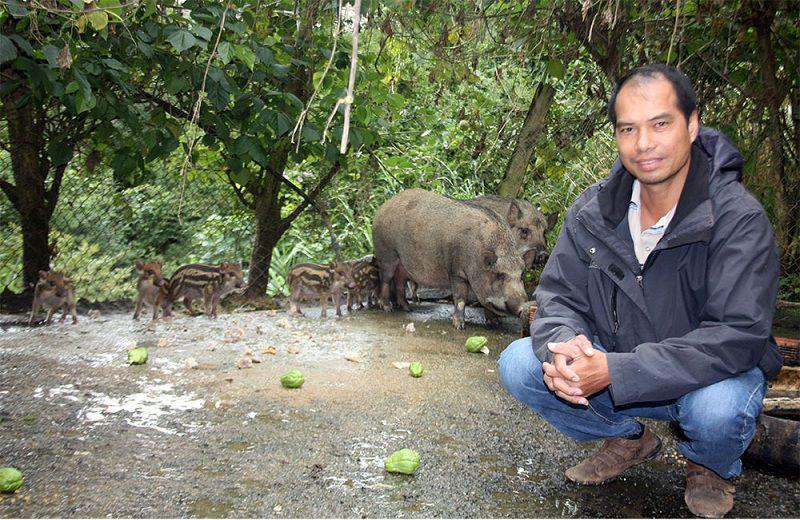 giong lon rung thai lan gia ban va dia chi ban lon rung thai lan giong 1 - Giống lợn rừng Thái Lan. Giá bán và địa chỉ bán lợn rừng Thái Lan giống