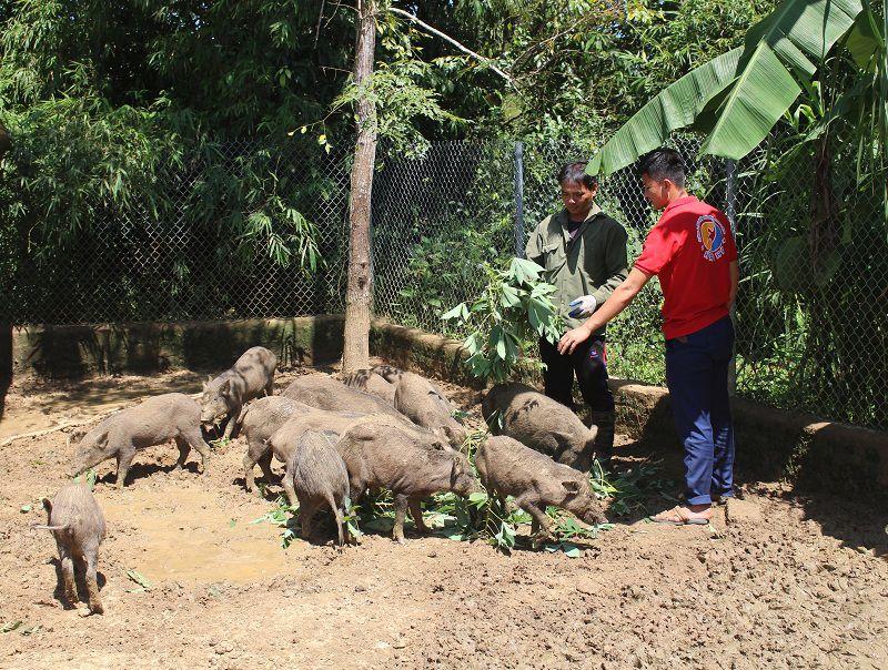 giong lon rung thai lan gia ban va dia chi ban lon rung thai lan giong - Giống lợn rừng Thái Lan. Giá bán và địa chỉ bán lợn rừng Thái Lan giống