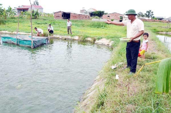 Ao nuôi cá trắm đen cần phải rộng và có độ sâu lớn