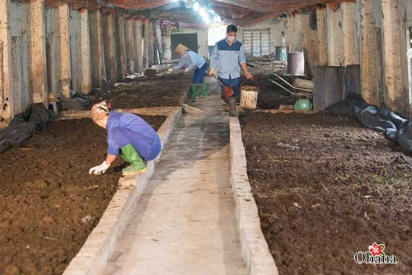 ky thuat nuoi trun que nang suat cao – nhanh duoc thu hoach 3 - Kỹ thuật nuôi trùn quế năng suất cao – nhanh được thu hoạch