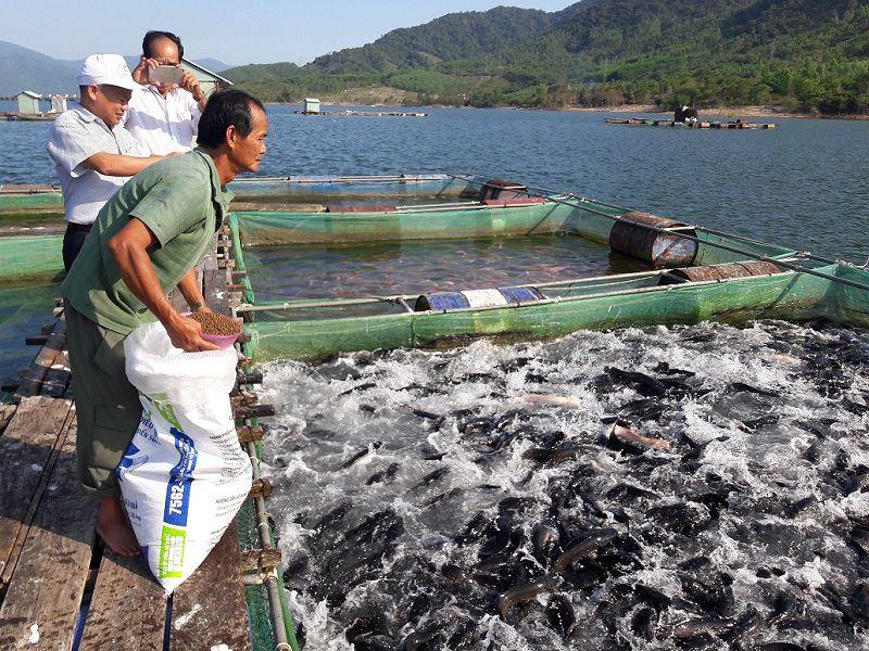 mo hinh nuoi ca loc ky thuat nuoi ca loc trong be xi mang - Mô hình nuôi cá lóc. Kỹ thuật nuôi cá lóc trong bể xi măng