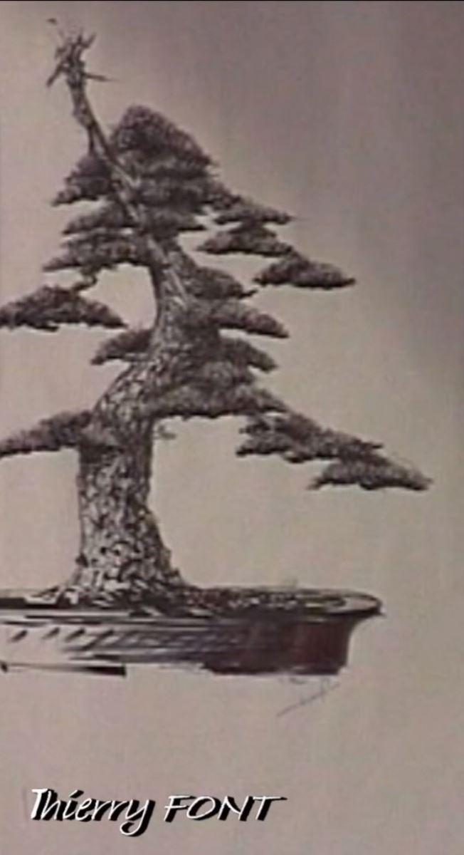 nghe thuat tao hinh cay canh - Nghệ thuật tạo hình cây cảnh